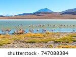 Small photo of James and Chilean flamingos in Laguna Hedionda located in the Bolivian altiplano near the Uyuni Salt Flat (Salar de Uyuni) in Bolivia, South America.