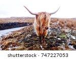 beautiful highlands cow | Shutterstock . vector #747227053