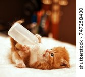 Stock photo cute young baby red kitten feeding from a bottle 747258430