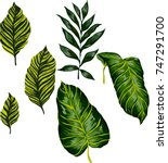 set of tropical leaves. vector. | Shutterstock .eps vector #747291700