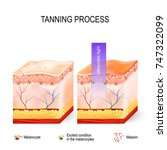 tanning process. when... | Shutterstock .eps vector #747322099
