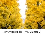 autumn and japan travel concept ... | Shutterstock . vector #747383860