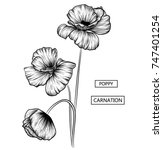 hand drawing poppy  tulip and... | Shutterstock .eps vector #747401254