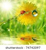 fresh morning dew and ladybird | Shutterstock . vector #74742097