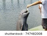 feeding a dolphin. | Shutterstock . vector #747482008