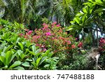 forest glade in the cool shade...   Shutterstock . vector #747488188