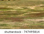 Ground Texture Of Dry Yellow ...