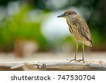 heron sitting on the river cost.... | Shutterstock . vector #747530704