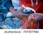 fisherman while cleaning the...