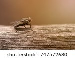 red eyes of the fly closeup | Shutterstock . vector #747572680