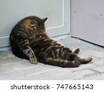 Stock photo humours photo of lazy cat cat sleeping in the street 747665143