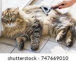long haired cat in brushing... | Shutterstock . vector #747669010