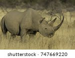 african white and black rhino | Shutterstock . vector #747669220