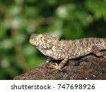 a lizard looking from an old... | Shutterstock . vector #747698926
