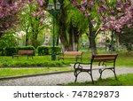 wooden benches under sakura...