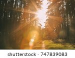 sun shining over forest lane ... | Shutterstock . vector #747839083
