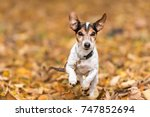 Dog In The Autumn Forest   Jac...