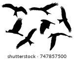 set of realistic vector... | Shutterstock .eps vector #747857500