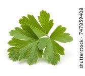 fresh parsley herb leaves ... | Shutterstock . vector #747859408