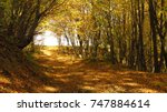 forest road in autumn | Shutterstock . vector #747884614