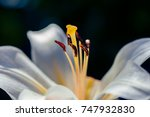 macro shot of flower. nature... | Shutterstock . vector #747932830