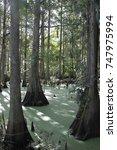 Small photo of Florida Swamp
