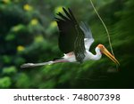 the painted stork is a large... | Shutterstock . vector #748007398