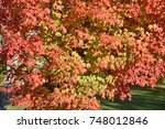 colors of fall  pretty natural... | Shutterstock . vector #748012846