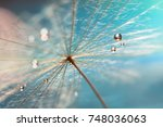 the droplet of water on the... | Shutterstock . vector #748036063