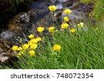 mountain flowers beside a small ... | Shutterstock . vector #748072354