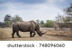 southern white rhinoceros in... | Shutterstock . vector #748096060