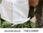 Woman Gardeners Hands Covering...