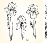 set of hand drawn iris  vector  | Shutterstock .eps vector #748128814