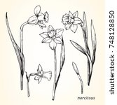 set of hand drawn narcissus ...   Shutterstock .eps vector #748128850