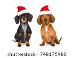 sitting and obedient couple of... | Shutterstock . vector #748175980