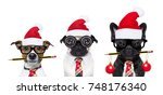 Stock photo row or group of dogs in working team with nerd glasses as an office business worker isolated on 748176340