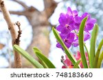 Small photo of Purple Orchid