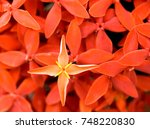 red flowers in winter welcome... | Shutterstock . vector #748220830