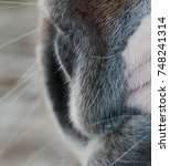 Small photo of nose or nostril of a horse with winter sure, grey with a rosy patch