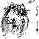vector art scottish shepherd | Shutterstock .eps vector #748266460