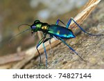 funny bug - stock photo