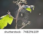 Spider's Web In The Sunlight