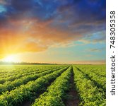 green agriculture field with... | Shutterstock . vector #748305358