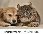 cat and puppy | Shutterstock . vector #748341886