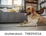 Stock photo funny dog eating appetizing treat 748354516