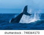 Humpback Whale In Pacific Ocean ...