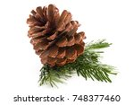 christmas cone with red berries ... | Shutterstock . vector #748377460