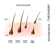 hair growth. anagen is the...   Shutterstock .eps vector #748394089