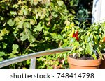 red chili peppers in a pot on a ... | Shutterstock . vector #748414798