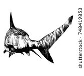 Shark Sketch Vector Graphics...